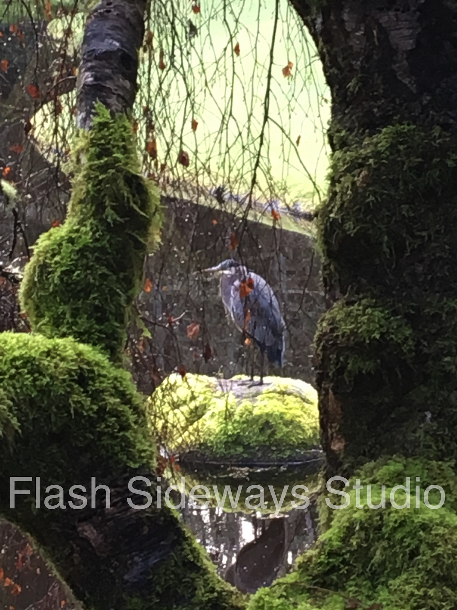 Blue-Heron-Watermarked_WM